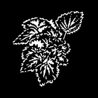 Foliage Begonia