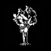 Trees - Olive