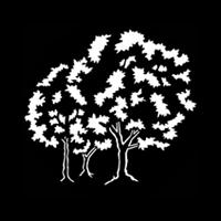 Trees Natural