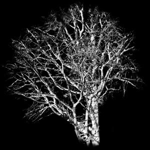 Chilling Tree