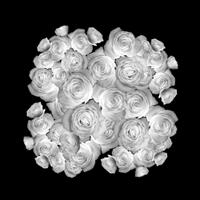 Breakup Roses 2